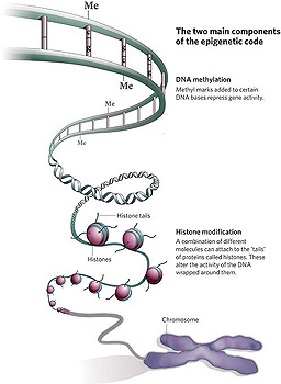 Epigenome illustration