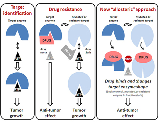 Anti-tumor diagram