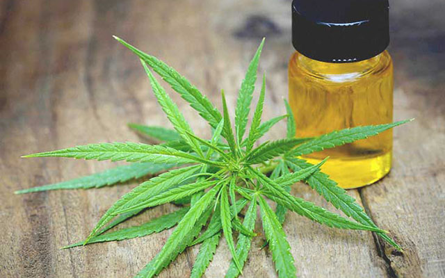 UC San Diego's Center for Medicinal Cannabis Research Awards Grants for Five Novel Studies