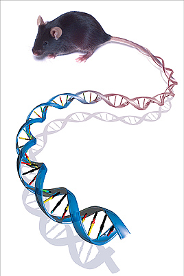 Graphic of mouse genome