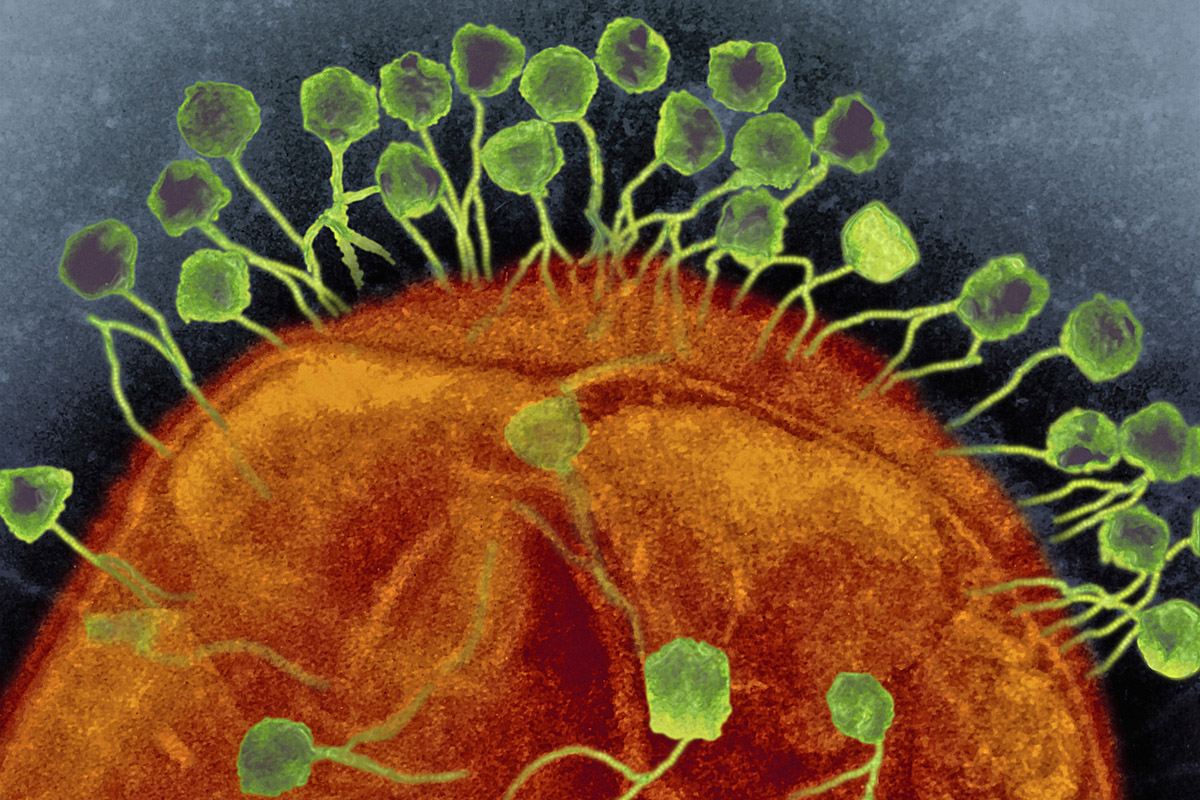 Novel Phage Therapy Saves Patient With Multidrug Resistant