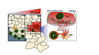 tumor stressor graphic