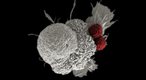 immunotherapy cells